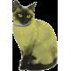 Coleira antipulgas e carraças natural para gatos